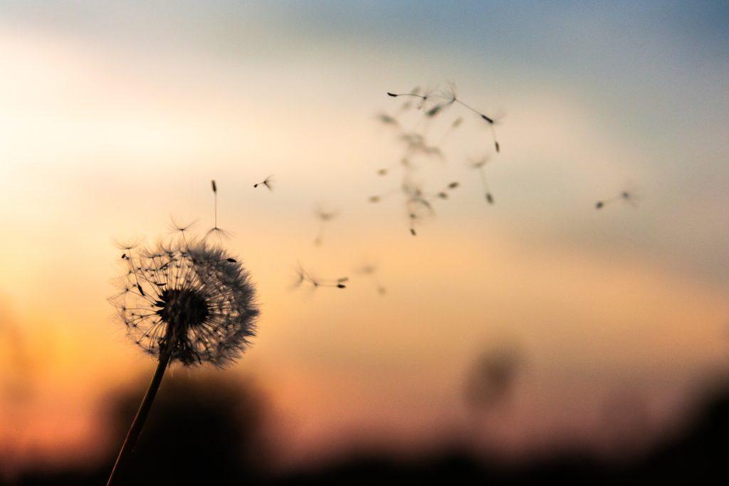 Lerne.Liebe.Leben., lerne liebe leben, selbstliebe, Melinda Cange, Mademoiselle Tarot, Videokurs, spirikurs, eigenliebe, lieben, verliebt sein, herzöffner, herz öffnen, herzmeditation, von herzen, von herz zu herz, aus vollem herzen lachen, herz heilen, glücklich sein, vergangenheitsbewältigung, mutterkonflikt, selbstwert, selbstvertrauen, heilen, emotional heilen, vergebung, vergebungsarbeit, ho'opponopono, moderne spiritualität, urbane spiritualität, meditieren, spiriszene, neue welt, geistige welt, eins sein, lichtarbeit, lichtarbeiterin, göttlicher funke, frei sein, energiearbeit, energiekörper, herz, herzensangelegenheit, negative Resonanz, resonanz, Melinda Cange, lerne liebe leben, Liebe, Videokurs, befreit, Selbstliebe, Eigenliebe, Wut transformieren, transformieren, Wut auflösen, Verletztlichkeit, Stärke,